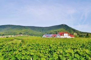KRIEGER Weingut im Rosengarten